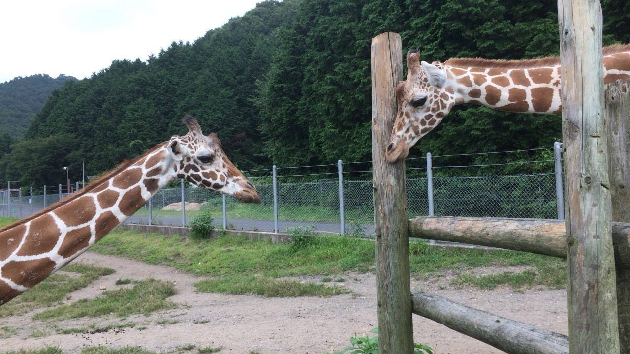 山口 サファリランド 遊園地 動物園