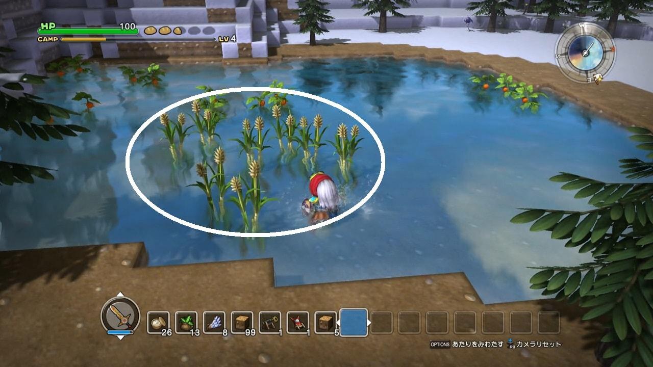 ため池の中にあまきび