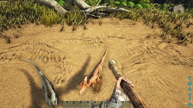 集まる小型恐竜